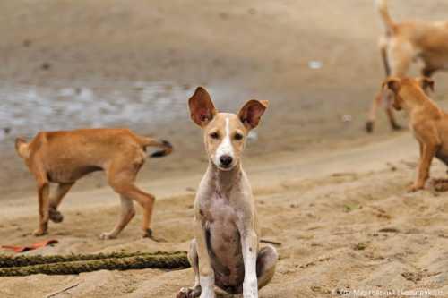 щенок или взрослая собака: кого взять